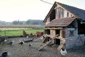 Hen house — Stock Photo