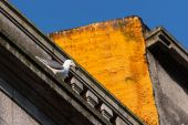 Seagull on building — Stock Photo