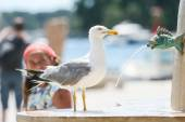 Seagull on water fountain in city — Stock Photo