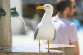 Seagull standing on fountain — Photo