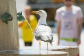 Seagull standing on water fountain — Stock Photo