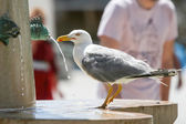 Side view of seagull on water fountain — Stock Photo