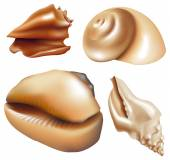 Set of shells, isolated on white background — Stock Vector