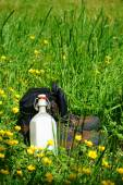 Hiking boots on a summer meadow — Stock Photo