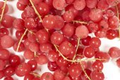 Frozen currants with stems — Stockfoto