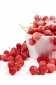 Currants with stems, frozen in white bowl — Stock Photo
