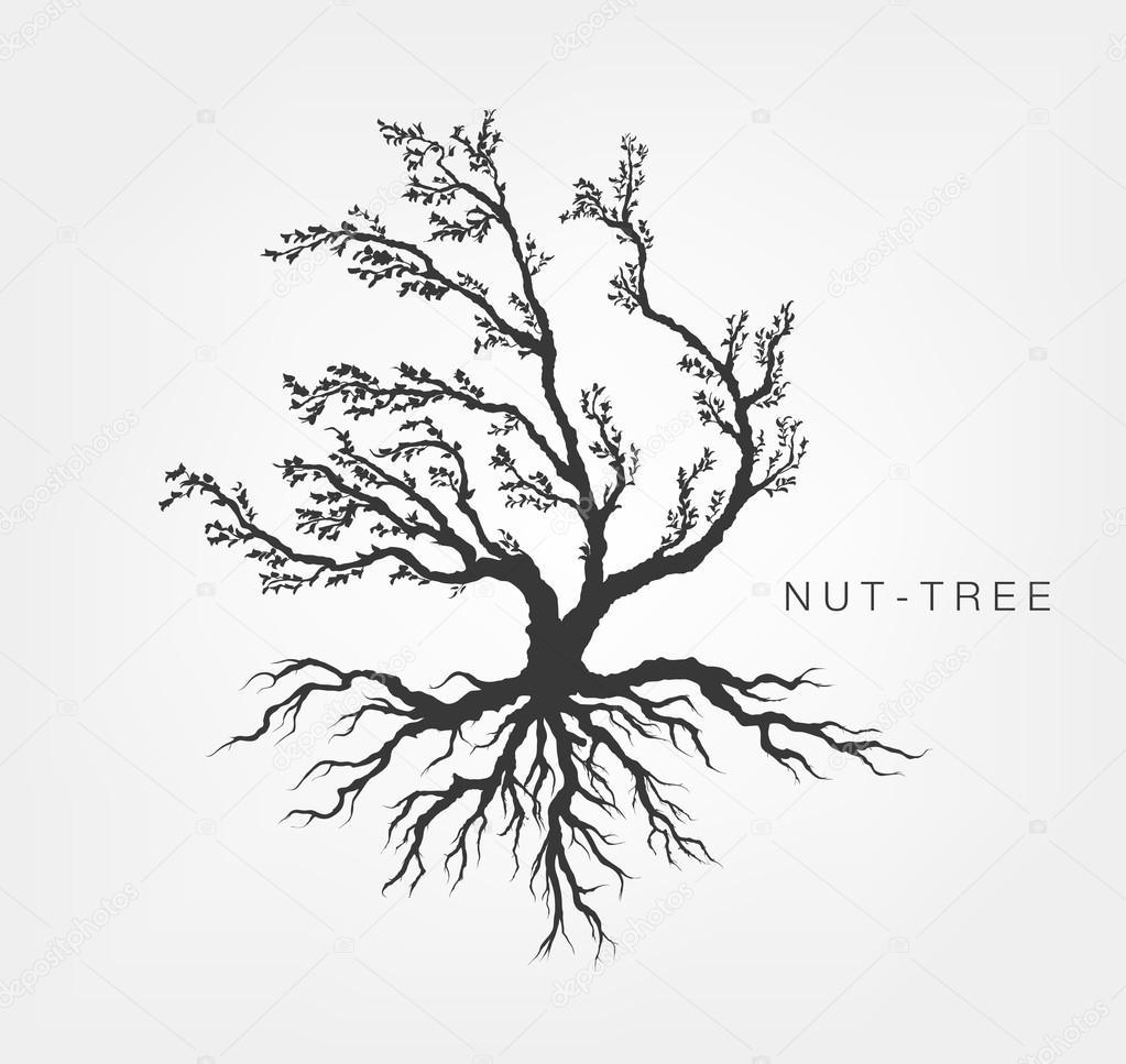 Árbol de avellano con sistema radicular — Vector de stock ...