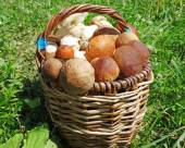 Fresh forest mushrooms in the basket — Stock Photo