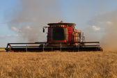 Zbiory pszenicy — Zdjęcie stockowe