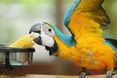 Macaw beautiful bird — Stock Photo