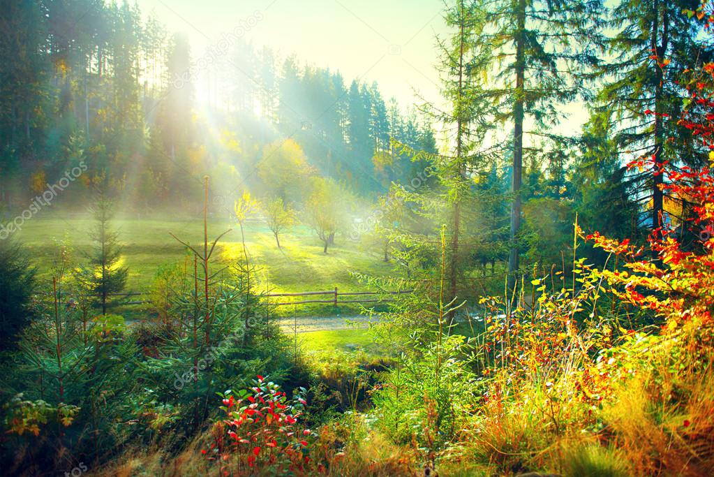 Фотообои Beautiful morning misty old forest