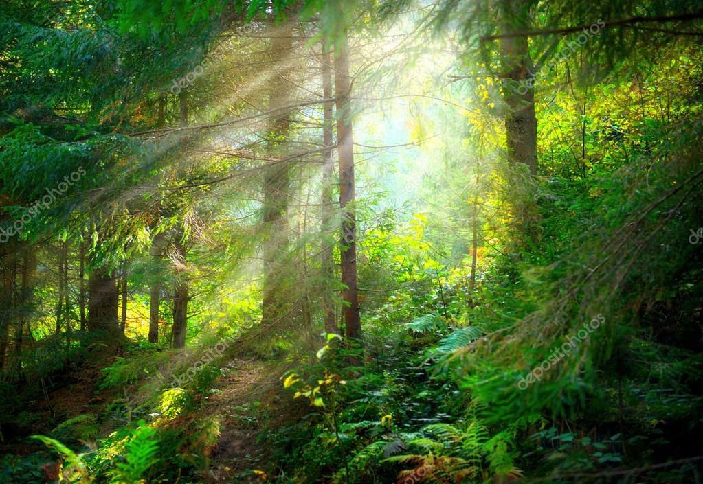 Фотообои Красивая сцена Мисти старый лес