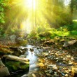 Mountain river in forest — Stock Photo #61540217