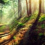 Scene misty old autumn forest — Stock Photo #61540835