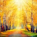 Autumn Trees  in sun rays — Stock Photo #61541499