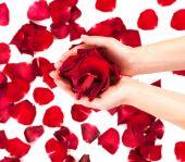 Rose petals in female hands — Stock Photo