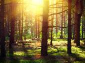 Autumn Woods with sunlight — Stock Photo