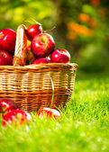 Organic Apples in a Basket — Stock Photo
