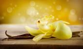 Vanilla Pod Sticks and Flower — Zdjęcie stockowe