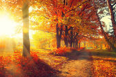 Autumnal Trees  in sun rays — Stock Photo