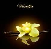 Pods and Flower of vanilla — Zdjęcie stockowe