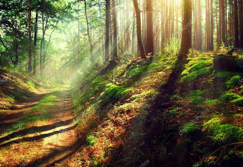 Фотообои Сцена Мисти старый осенний лес