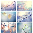 Collage of winter floral backgrounds — Stock Photo #74121007