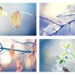 Collage of winter floral backgrounds — Stock Photo #74121019