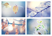 Collage of winter floral backgrounds — Stock Photo
