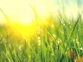 Erba fresca di primavera verde — Foto Stock