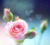 美しいピンクのバラ. — ストック写真