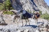 Donkey caravan in mountains of Tajikistan — Stock Photo
