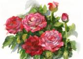 Watercolor illustration depicting the pink roses — Stock Photo