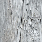 Vetor de textura de madeira — Vetor de Stock
