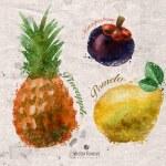 Fruits. Vector format — Stock Vector #54177141