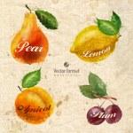 Fruits. Vector format — Stock Vector #54177163