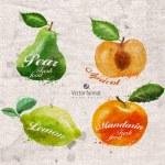 Fruits. Vector format — Stock Vector #54177271