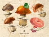 Mushrooms — Stock Vector