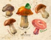 Mushrooms. Vector format — Stock Vector