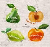 Fruits. Vector format — Stock Vector