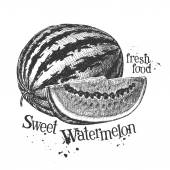 Watermelon on white background. sketch — Stock Photo