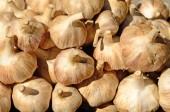 Garlic Bulbs — Stock Photo
