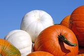 Pumpkin Farm — Stock Photo
