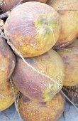 Ripe Coconut Fruit Bunch Close up Shot. — Stock Photo