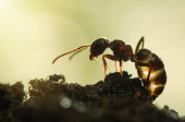 Ant early in the morning — Stock Photo