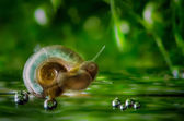 The snail and the air bubbles — Stock Photo
