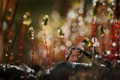 Love. Kisses. And the dew drops. Early spring. Ants — Stock Photo