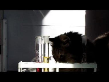 The cat looks at the vial of medicine — Stock Video