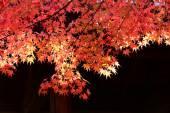 Zobacz do Momiji w jesieni — Zdjęcie stockowe