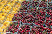 Fresh cherries and apricots — Stock Photo